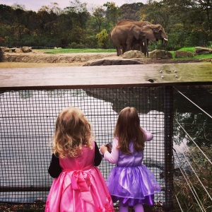Elephants and princesses